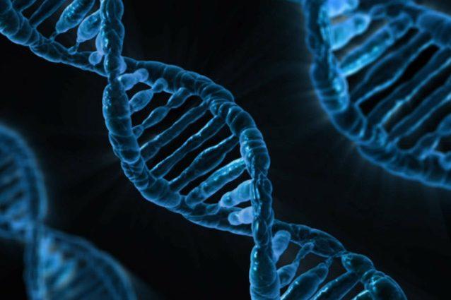 Il DNA ti dice a che età partorirai e quanti figli avrai, ecco come