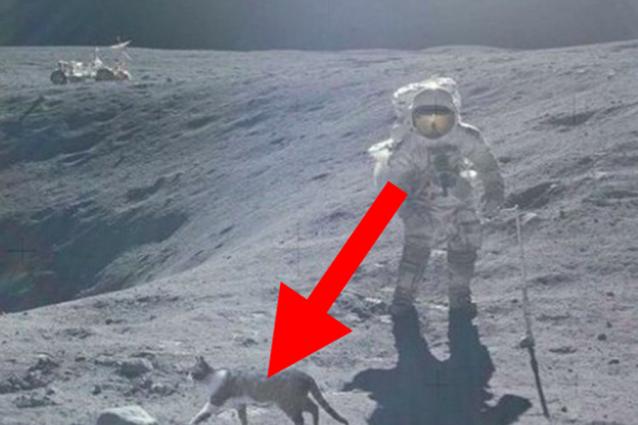 gatto-luna2