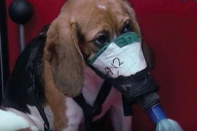 Possiamo curarci senza sperimentare sugli animali? Ecco cosa sono i metodi alternativi