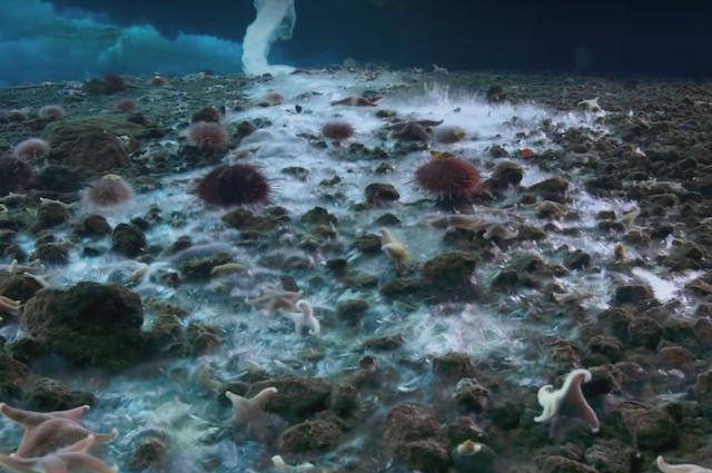 Cos'è il 'Dito della Morte' che uccide tutto ciò che colpisce sui fondali dell'Artico
