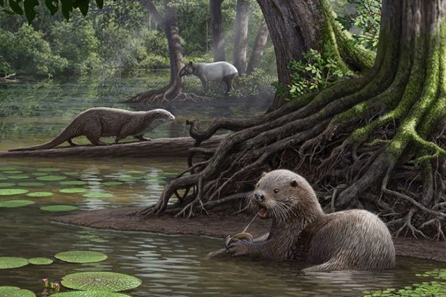 Lontra gigante cover