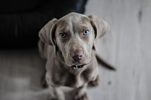 Puoi smettere di parlare al tuo cane come se fosse un bambino: ecco perché lo fai