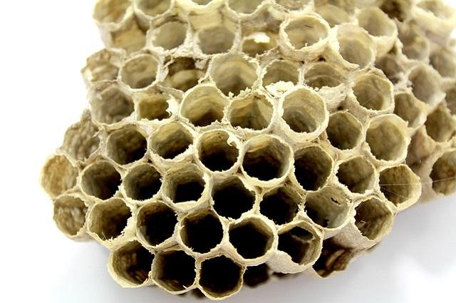 Alveare - Foto di Freeimages9 https://pixabay.com/it/ape-alveare-miele-insetto-lavoro-1555486/