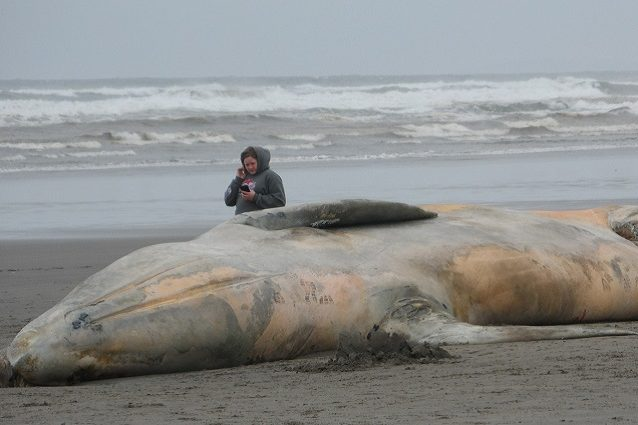 balena cover