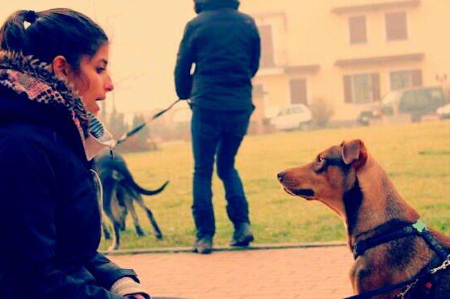 Guardati allo specchio se il tuo cane mezzo matto - Cane allo specchio ...
