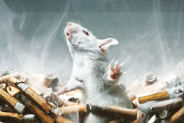 Iniezioni di sostanze nel cervello e xenotrapianti: l'Italia vuole ancora sperimentare sugli animali