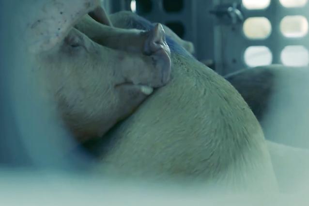Moby augura un felice San Valentino a tutti gli animali e a chi li ama e salva