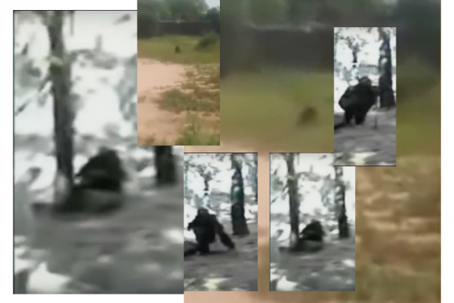 Un confronto fotografico tra il goblin recentemente avvistato e il ben più noto gnomo armato d'ascia, emblema dei video-fake sul tema.