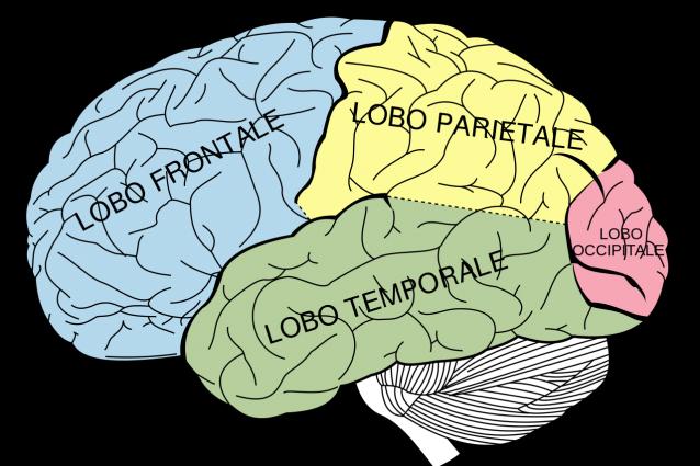 aree-cerebrali