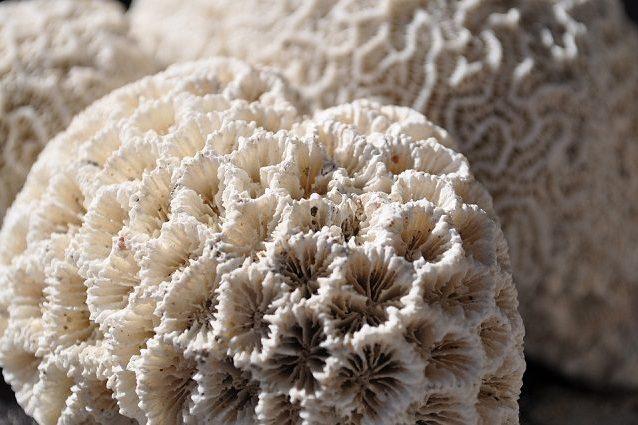 Un corallo sbiancato