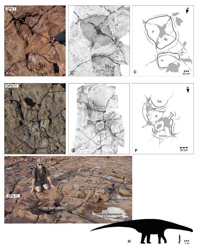 Australia, trovata l'impronta del dinosauro più grande di sempre: video esclusivo