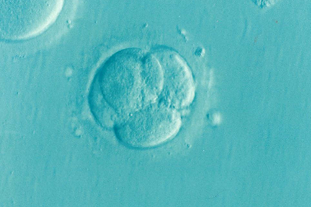 Scoperte le prime mutazioni genetiche della nostra vita