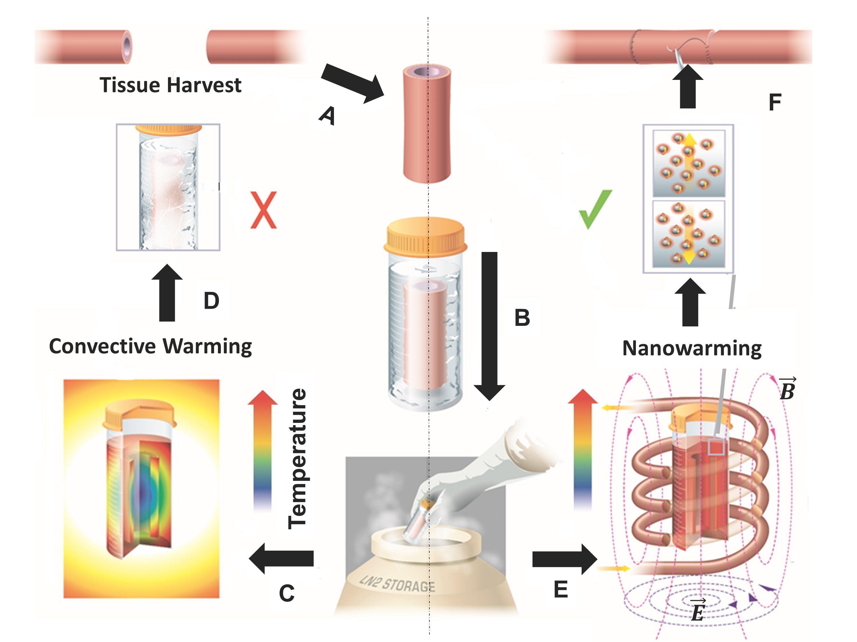 La procedura di scongelamento attraverso le nanoparticelle