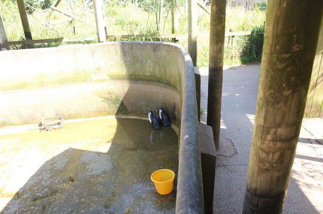 La vasca dei pinguini