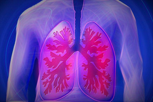 I polmoni hanno un'insospettabile e 'nuova' funzione
