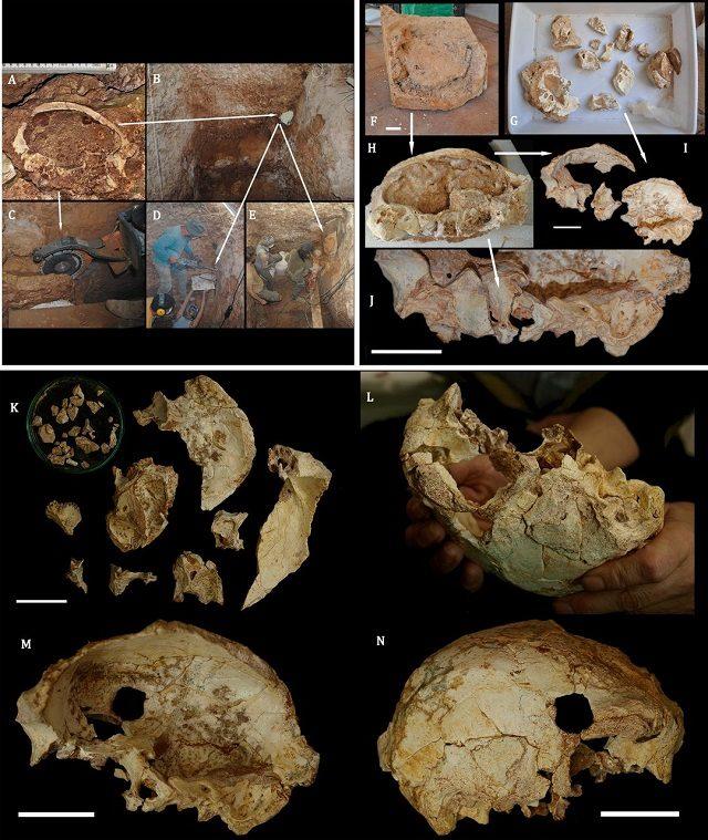 Il sito di scavo e i dettagli del cranio