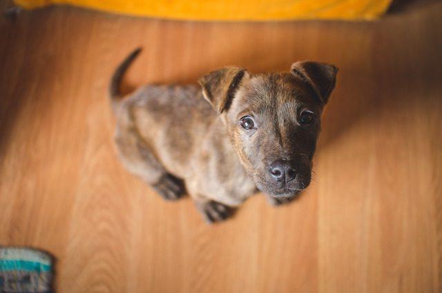 Che origine ha il tuo cane? Scoprilo con la più completa mappa evolutiva delle razze