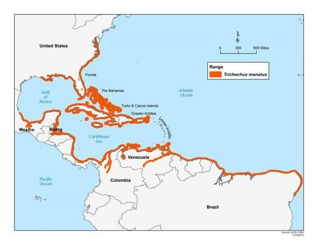 La mappa della distribuzione dei lamantini diffusa dallo US Fish and Wildlife Service