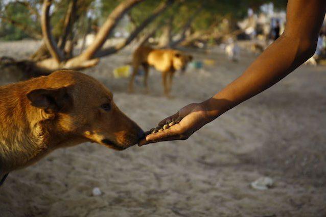 Chi dà cibo ad un cane randagio, ne è responsabile: la pericolosa sentenza della Cassazione