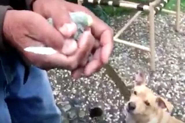 Salva un uccellino praticandogli la respirazione bocca a for Piani casa cane trotto