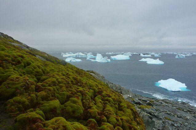 Il riscaldamento globale sta traformando l'Antartide: è sempre più verde