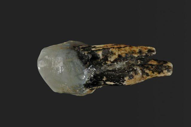 Due fossili di 7 milioni di anni riscrivono l'origine dell'uomo: forse siamo nati in Europa