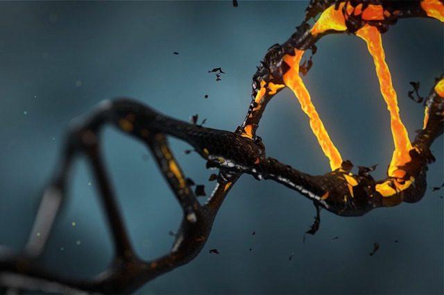 Per la prima volta, sconfitto l'HIV negli animali con l'editing genetico: come hanno fatto