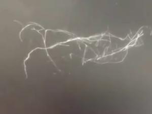 Filamenti misteriosi piovono dal cielo e scompaiono se li tocchi. Ecco cosa sono