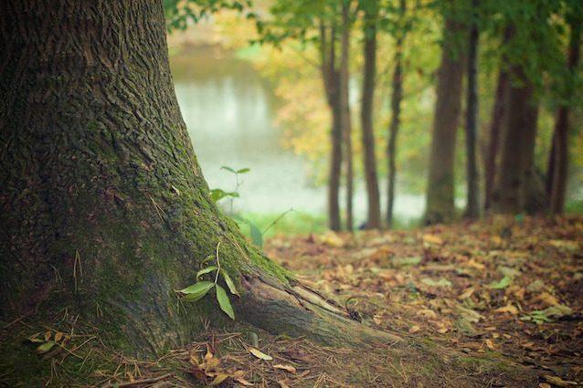 Le piante 'ascoltano' l'acqua per poterla raggiungere e sopravvivere