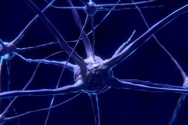 Neuroni 'di quartiere' o 'GPS': scoperte nuove cellule cerebrali utili all'orientamento