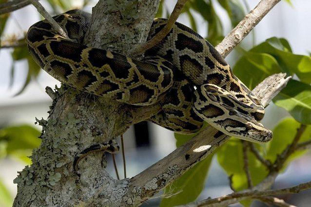 Alla scoperta dei segreti pi intimi dei serpenti per for Veleno per serpenti