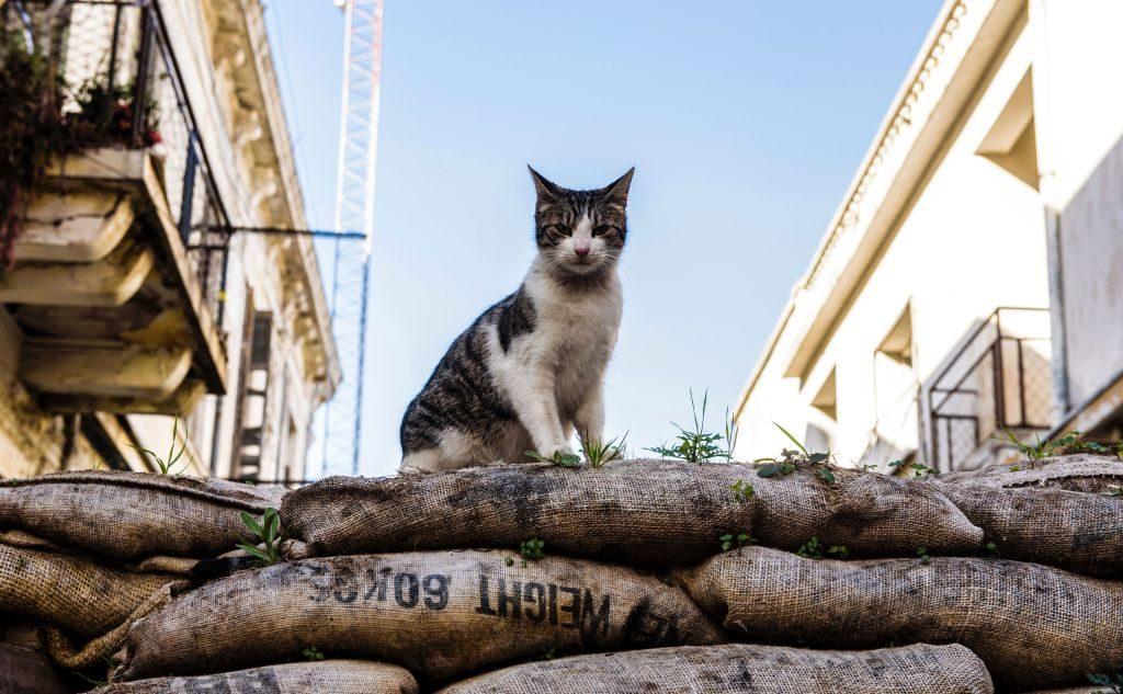 L'Impero dei Gatti dura da 9.000 anni: nel DNA i loro spostamenti e la passione per i topi