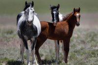 Ecco perch il cielo azzurro - Cavalli allo specchio ...