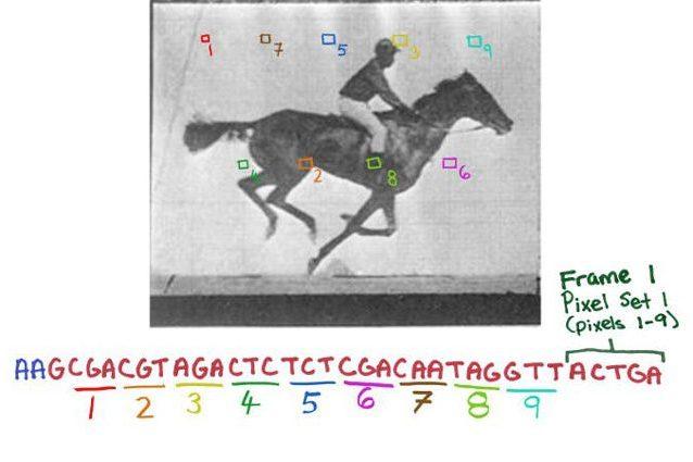 Batteri come schede di memoria: salvato un filmato nel loro DNA