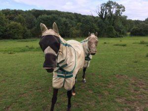 Burqa per cavalli acquistabili online, i siti xenofobi ci cascano subito