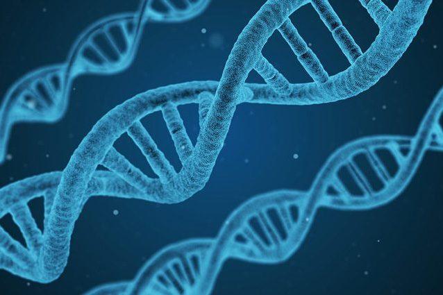 Embrioni umani modificati geneticamente: cosa significa e come cambia la nostra vita