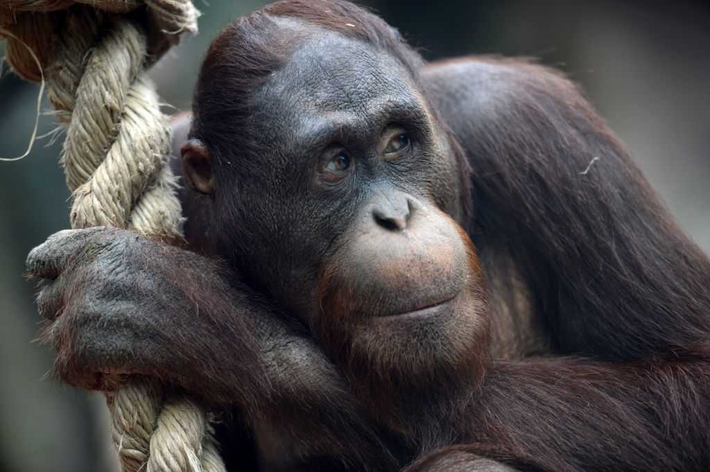 Ci siamo sbagliati sulle scimmie: l'arroganza dell'uomo ha influenzato la scienza