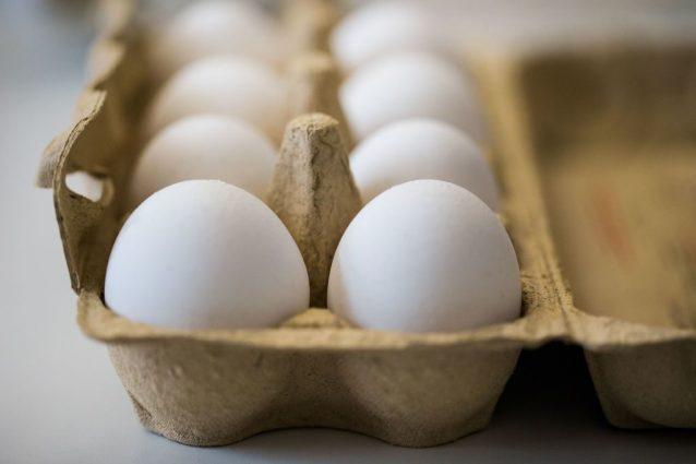 Uova contaminate: rischi per l'Italia e per la salute. Cos'è l'insetticida Fipronil