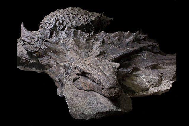 Un dinosauro così non l'avete mai visto: le immagini mozzafiato del più bel fossile di sempre