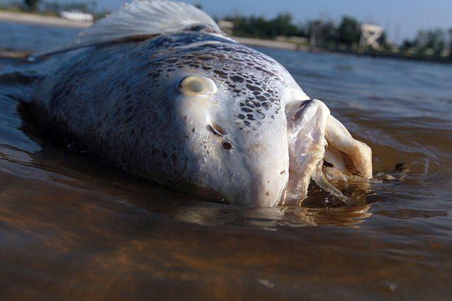 La Zona Morta del Golfo del Messico è fuori controllo: tonnellate di fertilizzante in mare