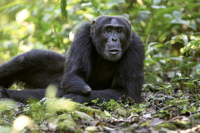 I pesticidi hanno deformato geneticamente le scimmie: così hanno trasformato volto e arti