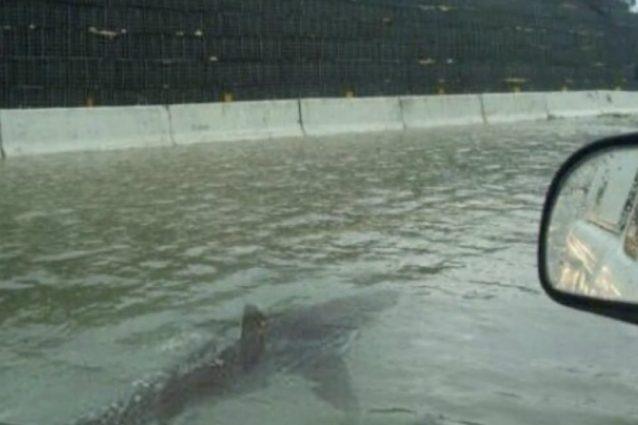 Il suggestivo fake dello squalo che si aggira per Houston, l'uragano Harvey non c'entra