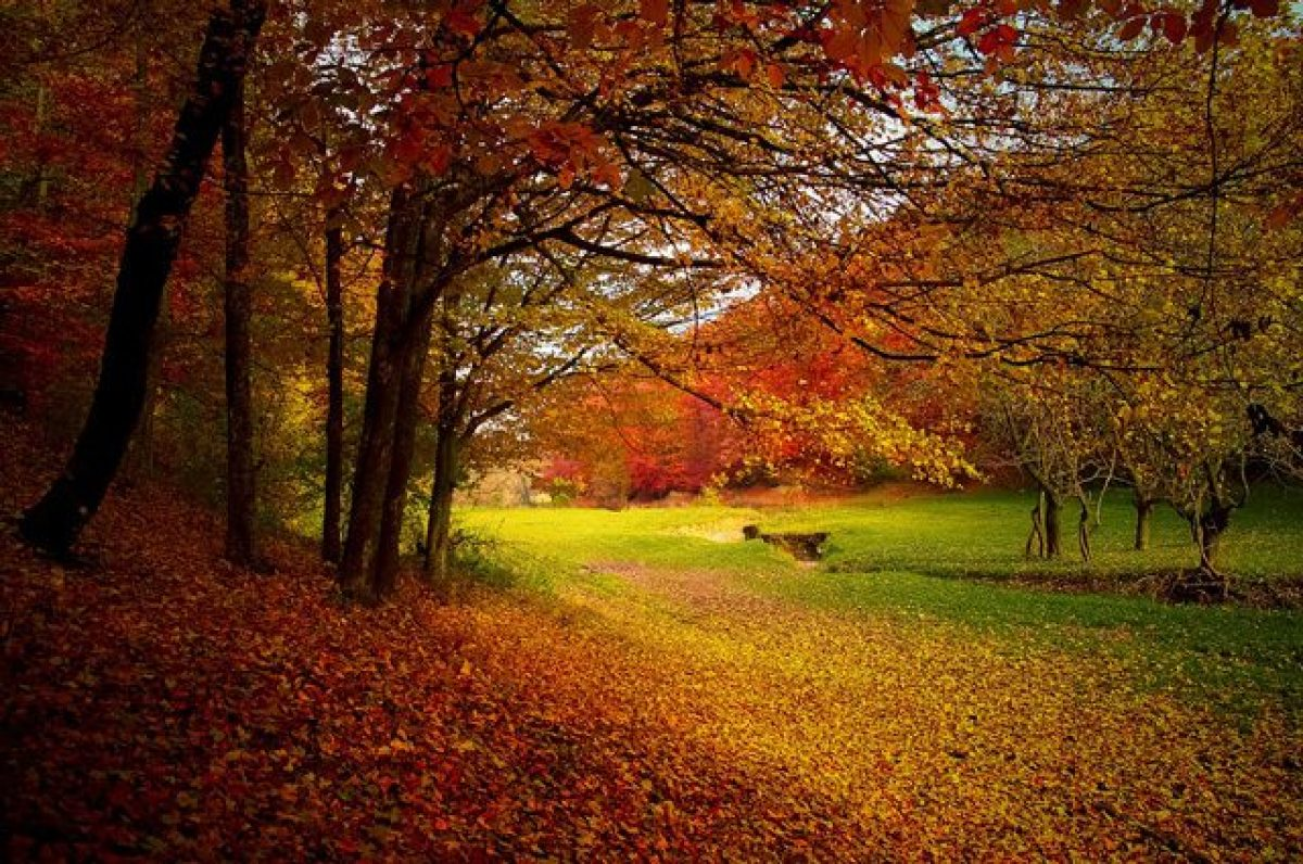Pianta Foglie Rosse E Verdi il colore delle foglie in autunno: perché da verdi diventano