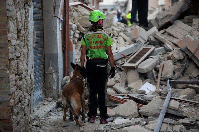 I 5 cani più coraggiosi d'Italia: chi sono gli eroi che ci salvano la vita ogni giorno