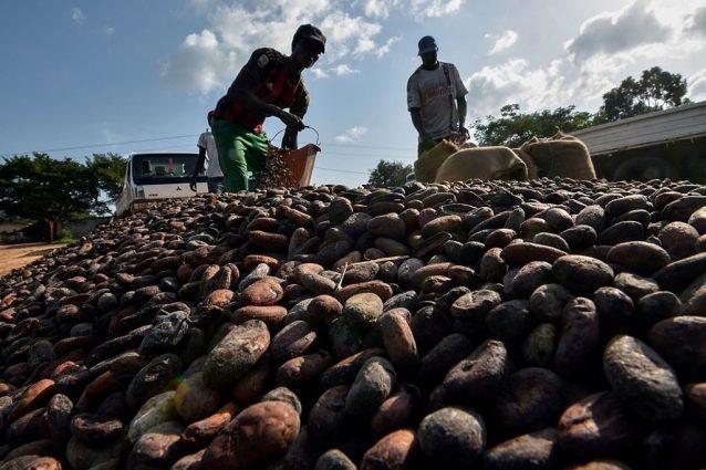 Il cioccolato è come l'olio di palma per l'ambiente: deforestazioni e morti sulla coscienza