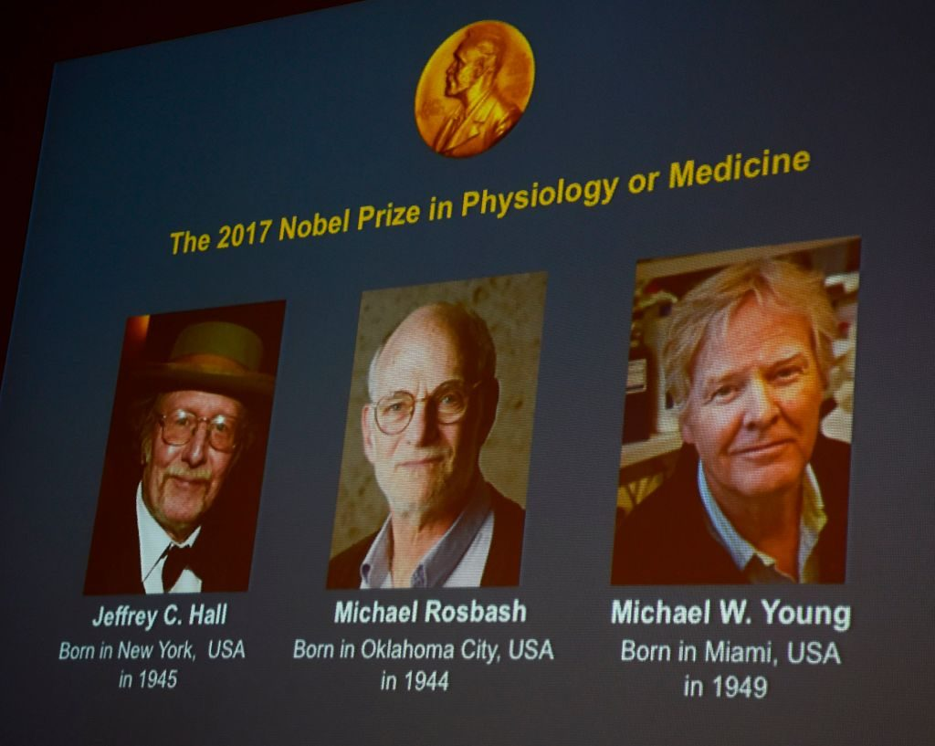 Nobel per la medicina 2017: cos'è il ritmo circadiano. Premio a Hall, Roshbash e Young