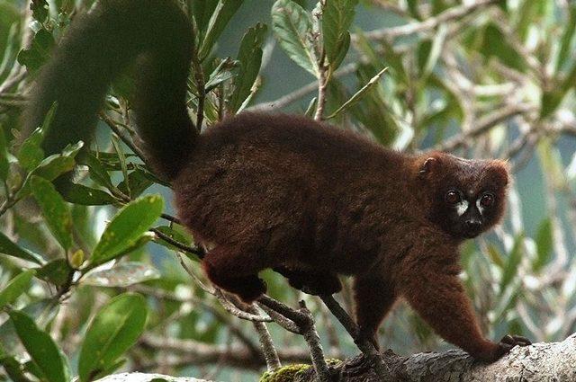 Abbracciarsi salva la vita: lo strano comportamento dei lemuri per non ammalarsi