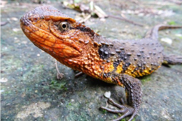 Le immagini delle 115 nuove specie scoperte: il WWF mostra le meraviglie del Grande Mekong