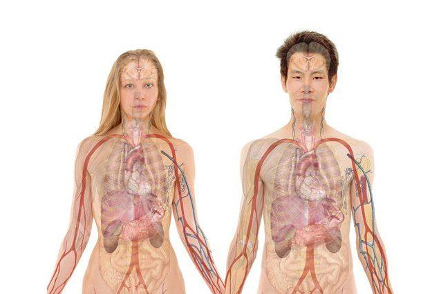 Fabbriche di organi con la stampa 3D: come funziona la rivoluzione dei trapianti