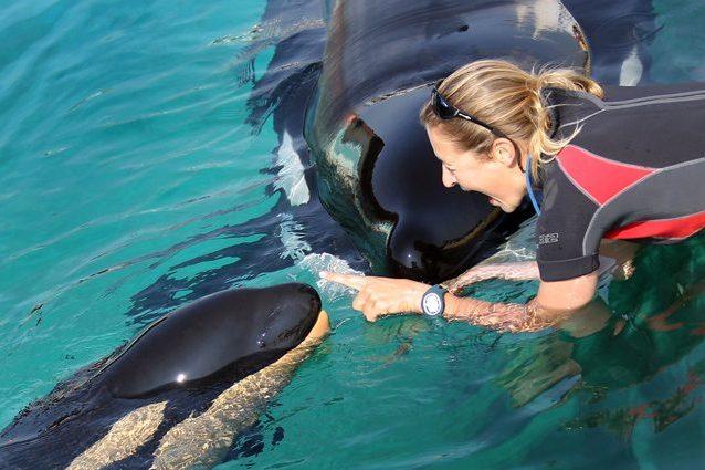 Le prime parole di Wikie, l'orca parlante - ASCOLTA